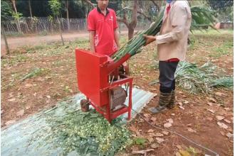 Máy thái cỏ nuôi bò l Thái cỏ voi làm thức ăn cho 20 con bò lãi 20 triệu 1 tháng